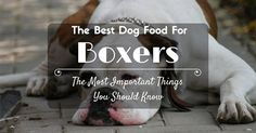 The Best Dog Food For Boxers: The Most Important Things You Should Know