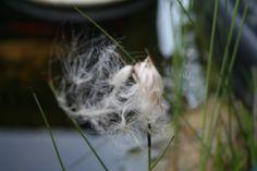 Fotografie Blume Natur Naturfotografie von MoniGossner auf Etsy, €17.50
