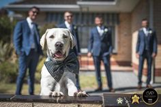 "It's so sad when we have to leave the ""Fur Babies"" behind & go to the wedding. #dogsaregueststoo    http://ift.tt/1EDCtHt   Follow us on @instagram  at @glenn_alderson_photography   . . . . . .  Locations:   #adelaidebrides  #adelaideweddings #adelaide #radadelaide #destinationweddings #adelaideweddingphotographer  Equipment:  #nikon #mynikonlife @nikonaustralia   Member:  @abiaaustralia Winner 2014  & 2016  2015  