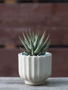 Plant Recipe Book Zebra Plant, Gardenista