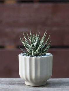 Plant Recipe Book Zebra Plant, Gardenista---The last plant featured in the book (the recipes are organized alphabetically by plant name), the zebra plant, or Haworthia, is Chapman's recommendation for a full-proof gift plant. It is easy growing, easygoing, and easy to transport.