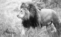 nambiti male - Zena Fogg Photography © 2014 - All rights reserved.