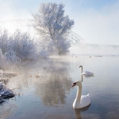 Icy Swan Lake by Edwin van Nuil This fantastic shot by Edwin captures perfectly a cold and bright winter's morning. The touch of blue in the sky and the orange of the swan's beak stand out all the. Beautiful Swan, Beautiful Birds, Beautiful Life, Beautiful Images, Winter Photography, Landscape Photography, Levitation Photography, Exposure Photography, Photography Awards
