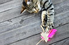 With fringed leather and bright feathers, this DIY cat toy is sure to provide hours of exercise and fun for your feline friend.