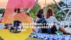 5 Dog Friendly Parks in the Tallahassee Area : Visit Tallahassee Dog Friends, Best Friends, Florida State University, State Government, Historical Sites, Small Towns, Great Places, Best Dogs, Parks