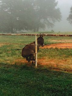 Donkey On A Fence