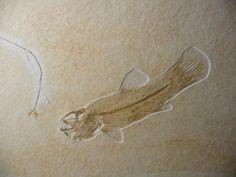Jurassic bowfin