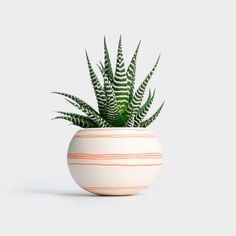 Haworthia | Wapa Planter – Orange