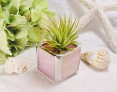 Baby Pink Iridescent  Stained Glass Tillandsia by MoreThanColors, $18.00