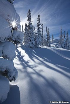 Sunburst behind pine tree with long shadows in winter, Deer Valley, Utah favorite - Landscape Nature Photographer Willie Holdman