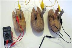 Potato Batteries: How to Turn Produce into Veggie Power!