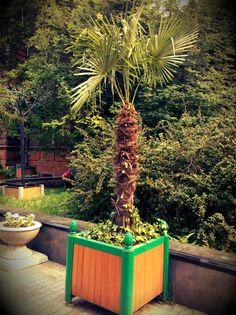 Streamzoo photo - Palm trees in Siberia