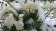 Winter does not want to succumb power spring!