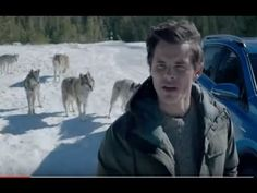 Wolf Pack - Toyota commercial. How exactly does he nurse the packs young? That's a bit disturbing!!!