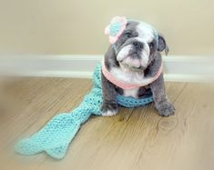 Juniper is our blue brindle English bulldog, she loves to dress up and take pictures! We reward her with blue buffalo treats to make the day special!