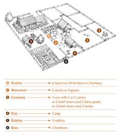 Layout of a half-acre homestead
