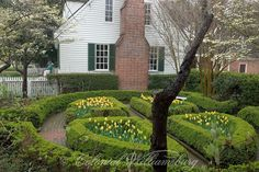 Yellow tulips and other Spring flowers at the Powell House garden in April. Colonial Williamsburg. Photo by David M. Doody.