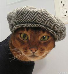 #Животные, #Коты, #Шапка,  #аватары, #картинки, #фотки