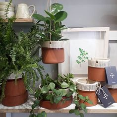 Our #arasdublin terracotta plant pots made by @helenfaulknerceramics are back in stock. Our customers seem to like them just as much as our shop plants. We have three styles available. Each pot is finished with Helen's hand scribed linear pattern and makers mark. Available in store and online priced €45 - €52   #houseplants #terracotta #irishcraft #irishceramics   #greenery Terracotta Plant Pots, Irish Design, Linear Pattern, Makers Mark, Potted Plants, Houseplants, Greenery, This Is Us, Planter Pots