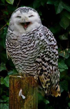 Haha they asked how many licks it takes to get to the center of a tootsie pop!  I told them wrong owl!!