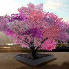 SU sculptor Sam Van Aken's Tree of 40 Fruit appears in more than 15 cities.