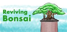 Most new bonsai tree owners don't know how to care for their bonsai. It's not difficult to grow a bonsai, but it requires knowing these fundamentals about how to evaluate and take care of them.