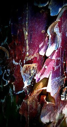 tree #bark #texture.  Nice color and value combination.