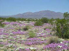 Las plantas con flores en el desierto