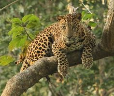 (via 500px / Leopard by Balaji Sankaran)