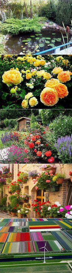 Статьи - Мир в цвету - сайт о комнатных растениях и садовых цветах