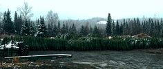 Get a Sneek Peek at one of our loading yards! We are hard at work preparing your perfect Christmas Tree for delivery right to your doorstep! Christmas Shopping Online, Fresh Cut Christmas Trees, Christmas Countdown, Yards, Delivery, Mountains, Yard, Bergen