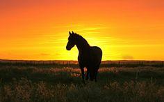 caballo al atardecer