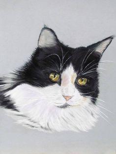 Un chat angora blanc et noir portrait animalier au pastel