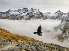 Bird of Paradiso