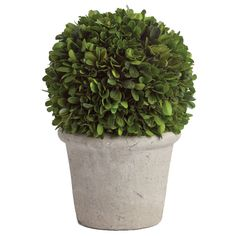 The topiarist's art originated in Roman times and reached its pinnacle in the royal gardens of Renaissance Europe. Inspired by this fanciful pursuit, our naturally preserved boxwood mini topiary add a