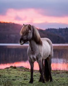 Pretty horse on lake under pink sunset, so beautiful.