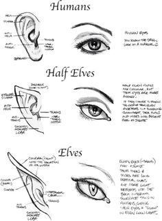 The Half Elves ear is the only thing that I've been able to find that shows what I imagine Asha's ears to look like. I didn't want them too long and pointy, more like human ears with a tiny point at the top. Very subtle and easy to miss unless you know it's there or she has her hair drawn back from her ears.