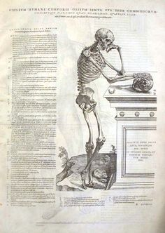 andresas vesalius essay Andreas vesalius (1514–1564) is primarily remembered as the founder of   published a critical and experimental essay on the circulation of the blood [6.