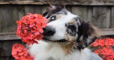 8 Tips for a Pet-Friendly Yard Pet Dogs, Dog Cat, Pet Safe, Dog Training Tips, Dog Owners, Pet Portraits, Dog Toys, Doge, Dog Breeds