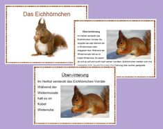 The Squirrel (easy and difficult) - playing - easy - learning - The Squirrel (easy and difficult) – playing – easy – learning Informations About Das Eic - Easter Tree, Easter Eggs, Woodland Party, Blogger Themes, Forest Animals, Chipmunks, Teaching Kids, Squirrel, Corgi