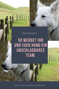 #hund #hunde #hundesport #Mantrail #hundeliebe Hier erfahrt ihr es!