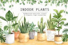 Indoor Plants Watercolor Clipart by everysunsun. The set of high quality hand painted watercolor indoor plants and plant pots images. A fiddle leaf fig, snake plant, cactus and other animal illustrations are included in this set. Watercolor Plants, Watercolor Leaves, Watercolor And Ink, Watercolor Design, Pot Image, Leaf Clipart, Wedding Clip, Pencil Illustration, Animal Illustrations