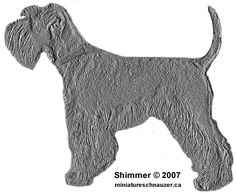 Ranked as one of the most popular dog breeds in the world, the Miniature Schnauzer is a cute little square faced furry coat. Schnauzer Breed, Schnauzer Grooming, Miniature Schnauzer Puppies, Mini Schnauzer, Pet Grooming, Teacup Yorkie, Silly Dogs, Most Popular Dog Breeds, Dog Boarding