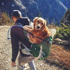 This senior dog loves hiking...even in old age, his human helps him enjoy life to the fullest.