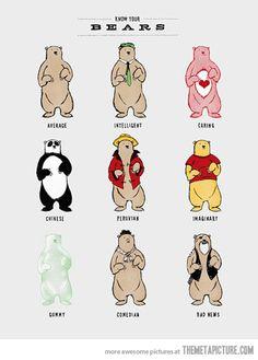 Types of bears…Hahahaha