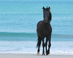 Coralla Wild Horses