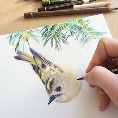 Beautiful bird by: @jessicalennox Please visit the artist to support their hard work! Follow us @art.realism for more! Show some love with a comment or tag your friends! #realisticart #realism #drawing #painting #realistic_art #birdpainting #birdart #animaldrawing #animalart