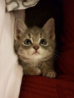 Man Hears Meowing and Finds Kitten Under Car, Trying to Attack His Shoe.