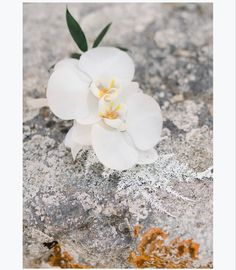 #orchids #kefaloniaflorist #kefaloniawedding #weddinginkefalonia #kefalonia #whristcorsage #corsage #whiteflowers My Wedding Planner, Wrist Corsage, Our Wedding Day, Event Styling, Amazing Flowers, Fairy Lights, White Flowers, Orchids, Bridal