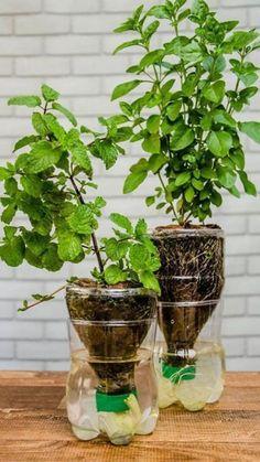 Hydroponic Gardening Equipment You Want to Check Out 22 Diy Gardening Diy Gardening, Hydroponic Gardening, Garden Crafts, Hydroponics, Garden Projects, Container Gardening, Garden Ideas, Gardening Apron, Veg Garden